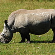 Lake Nakuru White Rhinoceros Art Print