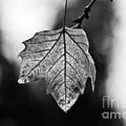 Last Standing Leaf Art Print