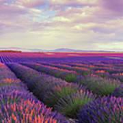 Lavender Field At Dusk Art Print