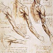 Leonardo: Anatomy, 1510 Art Print