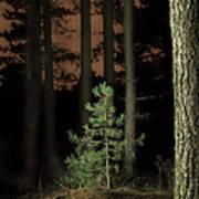 Lightpainting The Pine Forest New Growth Art Print by Dirk Ercken