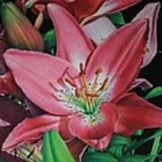 Lily's Garden Art Print