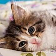 Little Cat Kitten Art Print