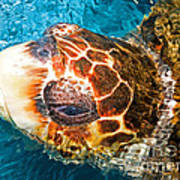 Loggerhead Sea Turtle Art Print
