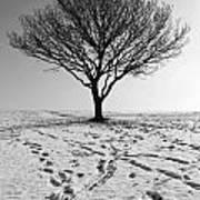 Lone Tree Winter Art Print