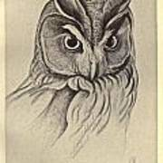 Long Eared Owl Art Print