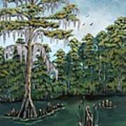 Louisiana Cypress Art Print