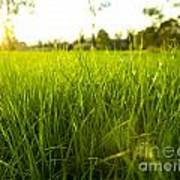 Lush Grass Art Print