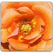 Macro Image Of A Rose Art Print