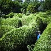 Man Lost Inside A Maze Or Labyrinth Art Print