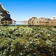 Marine Algae Art Print