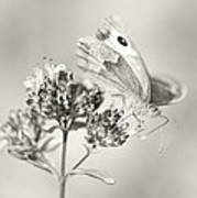 Meadow Brown Art Print