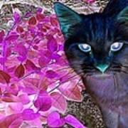 Meow 2 Art Print