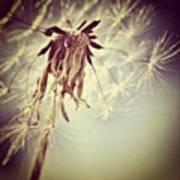 #mgmarts #dandelion #makeawish #wish Art Print