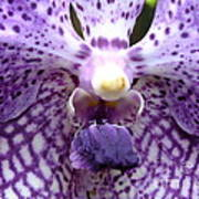 Micro Orchid Art Print