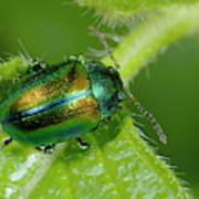 Mint Beetle Art Print