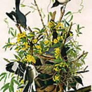 Mocking Birds And Rattlesnake Art Print