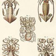Molluscs Or Soft Worms Art Print