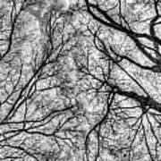 Monochrome Forest Art Print