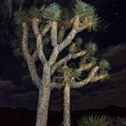 Moon Over Joshua - Joshua Tree National Park In California Art Print