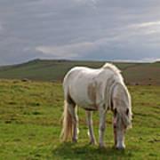 Moorland Pony, Davidstow, Bodmin Moor Art Print