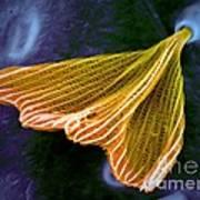 Moth Scale, Sem Art Print