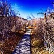 Mountain Creek Path-sundance Utah Art Print