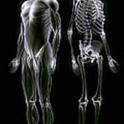 Muscles And Bones Art Print