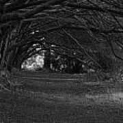 Mystical Yew Trees 1 Art Print