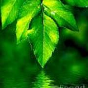 Natural Leaves Background Art Print