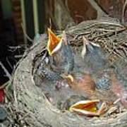 Newborn Robins Art Print
