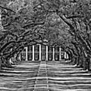 Oak Alley Bw Print by Steve Harrington