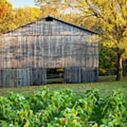 Old Tobacco Barn Print by Brian Jannsen