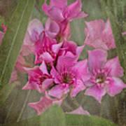 Oleander Cluster Art Print