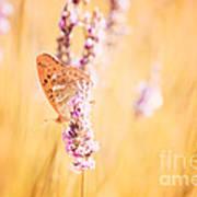Orange Butterfly Art Print