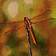 Orange Dragonfly Art Print