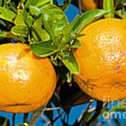 Orange Fruit Growing On Tree Art Print