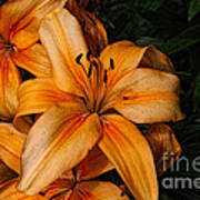 Orange Lilies Art Print