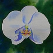 Orchid Dance 2 Art Print