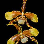 Orchid Series 104 Art Print