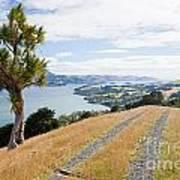 Otago Peninsula Coastal Landscape Dunedin Nz Art Print