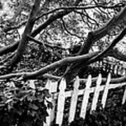 Overflowing A Picket Fence Art Print