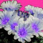 Painterly Cactus Flowers Art Print