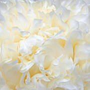 Pale Peony Petals Art Print