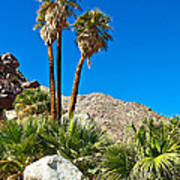 Palm Oasis On Borrego Palm Canyon Trail In Anza-borrego Desert Sp-ca Art Print