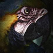 Parrot 9 Art Print