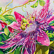 Passionflower Party Art Print