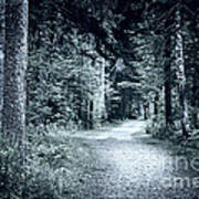 Path In Dark Forest Art Print by Elena Elisseeva