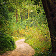 Pathway In The Woods Art Print