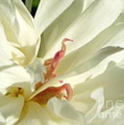 Peaceful Sentinel Of The White Peony Art Print
